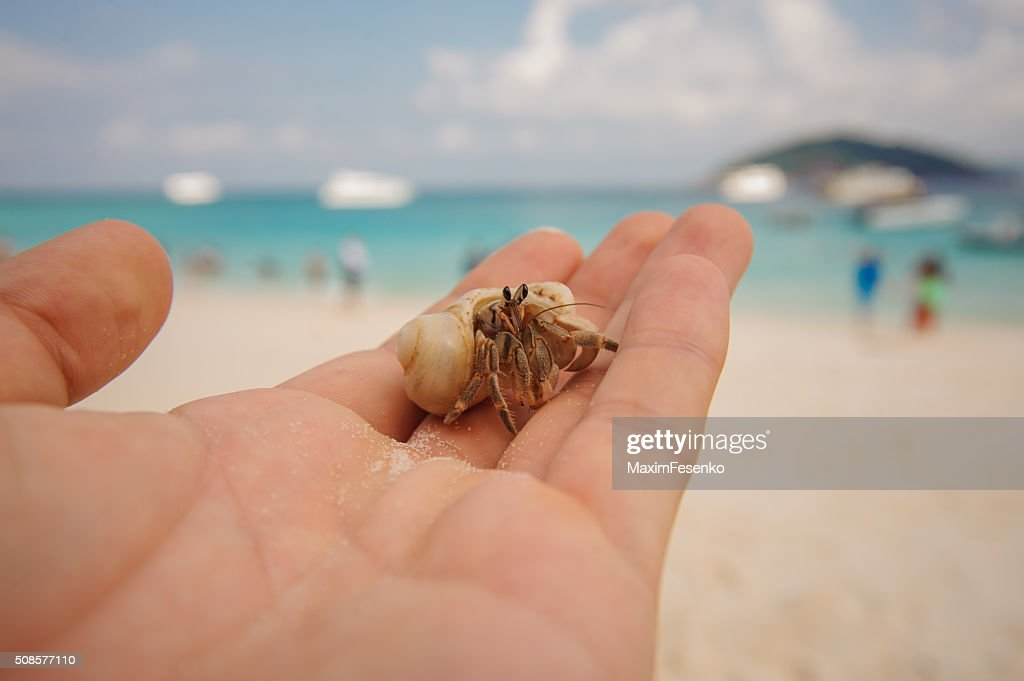Diogenes-crab hermit , pagurian, soldier crab on  male hand : Stock Photo