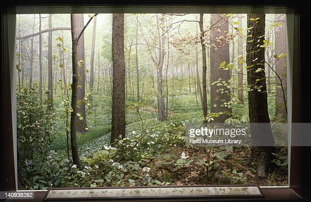 Diorama depicts a woodland region of Illinois December 1 1982