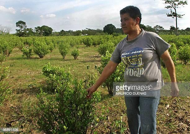 Dioselina Bedoya observa su cultivo de coca antes de ser erradicado el 13 de febrero de 2006 en el parque natural de La Macarena municipio de...
