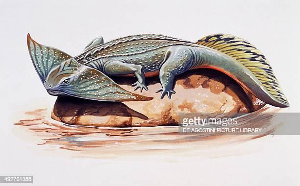 Diplocaulus sp Keraterpetonidae Permian Artwork by Chris Turnbull