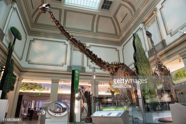 Diplodocus dinosaur skeleton is on display in the National Fossil Hall, featuring around 700 fossil specimens that track the history of life on the...