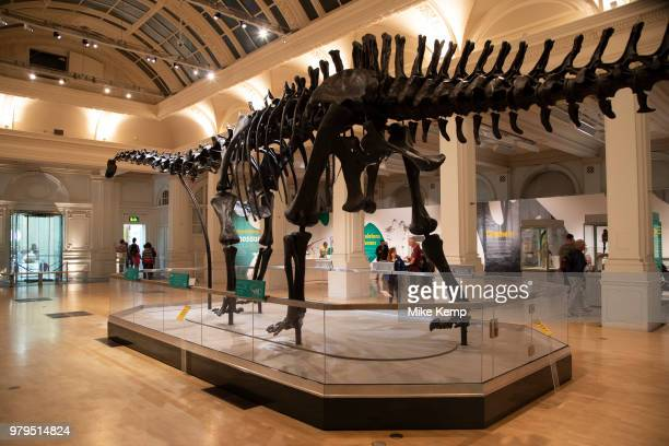 Diplodocus dinosaur skeleton known as Dippy on tour at the Gas Hall part of Birmingham Museum in Birmingham United Kingdom