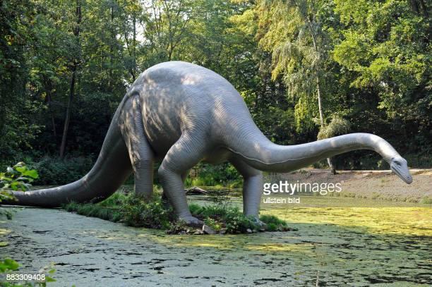 Diplodocus ein bis 30 m langer Dinosaurier hauptsaechlich Pflanzenfresser lebte in der Juengeren Jurazeit vor 205 bis 130 Millionen Jahren an...