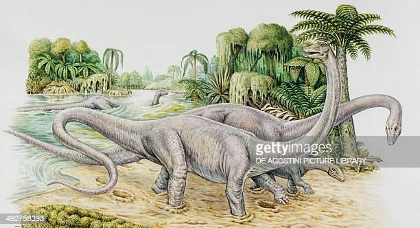 Diplodocus sp Diplodocidaee Late Jurassic Illustration