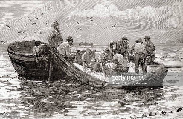 Dipping for pilchards in the 19th century From The Strand Magazine Vol I January to June 1891