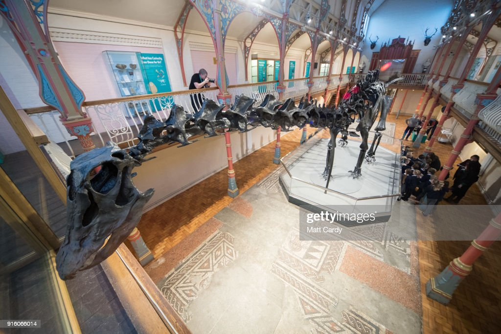 Dippy The Diplodocus Arrives At Dorset County Museum : News Photo