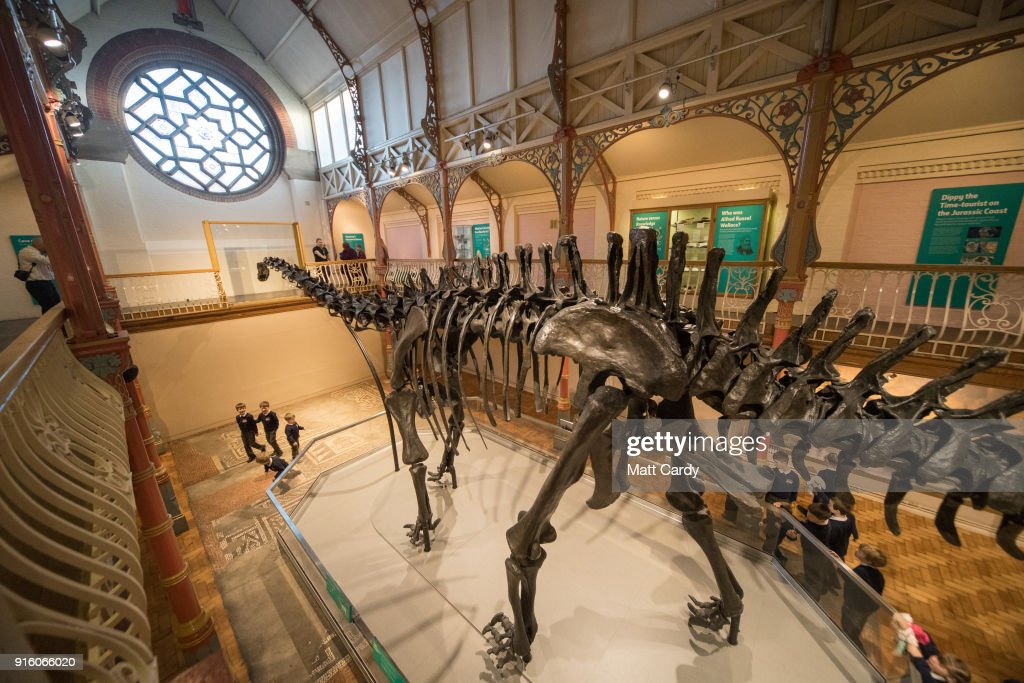 Dippy the dinosaur, a diplodocus skeleton on loan from the Natural History Museum is unveiled at Dorset County Museum on the first stage of an eight-stop tour of the UK on February 9, 2018 in Dorchester, Dorset. Some five million people are expected to see Dippy over the next two years at venues ranging from the Welsh assembly to Norwich Cathedral.