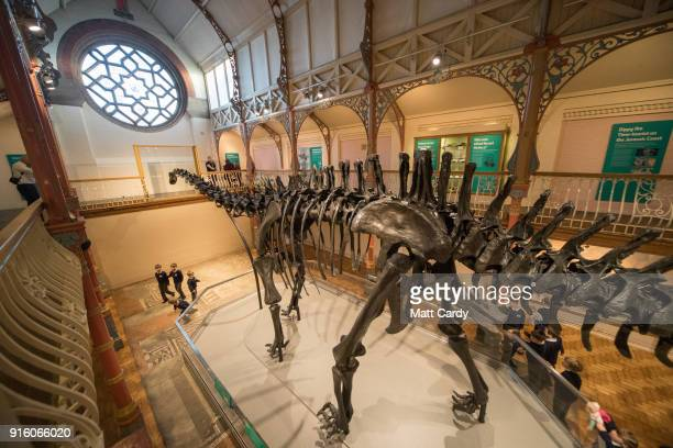 Dippy the dinosaur, a diplodocus skeleton on loan from the Natural History Museum is unveiled at Dorset County Museum on the first stage of an...