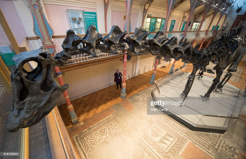 Dippy the dinosaur, a diplodocus skeleton on loan from the Natural History Museum is unveiled at Dorset County Museum on the first stage of an eight-stop tour of the UK on February 9, 2018 in Dorchester, Dorset. Some 5 million people are expected to see Dippy over the next two years at venues ranging from the Welsh assembly to Norwich Cathedral.