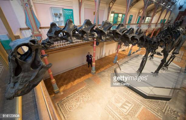 Dippy the dinosaur a diplodocus skeleton on loan from the Natural History Museum is unveiled at Dorset County Museum on the first stage of an...