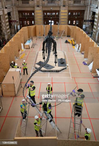 Dippy the famous diplodocus from the Natural History Museum is put back together after being transported to Glasgow in 16 bespoke crates ahead of...