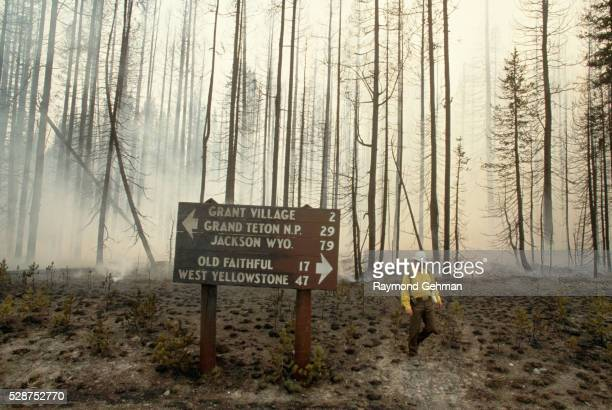 Directional Sign in Burned Forest