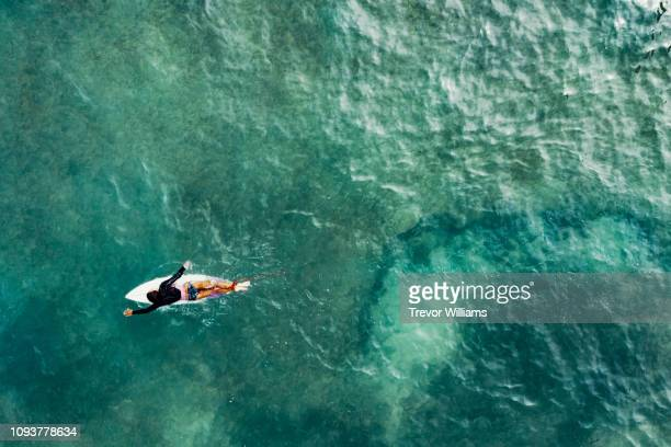 directly above of a mature woman on a surfboard paddling out to the waves while surfing - surf stock pictures, royalty-free photos & images