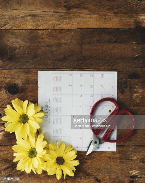 Directly above of calendar sheet, three yellow daisies, and gardenig scissors on old wooden background with copy space.