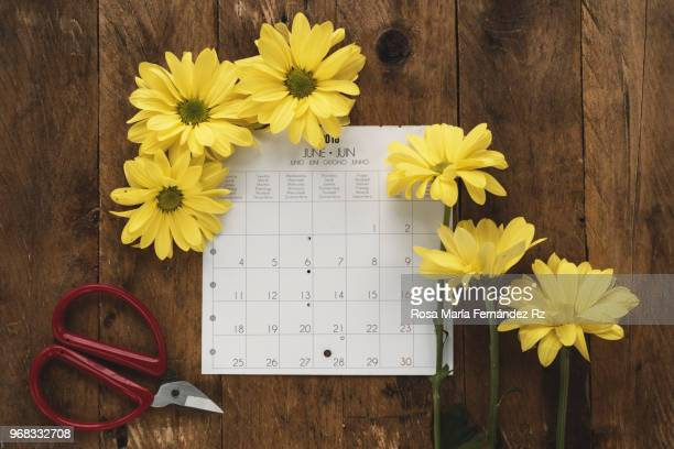 Directly above of calendar sheet, yellow daisies, and gardenig scissors on old wooden background with copy space.