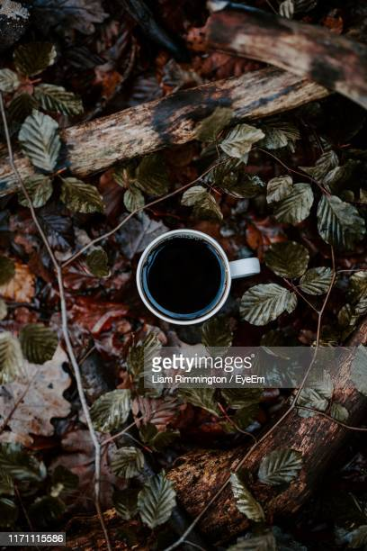 directly above of coffee cup amidst plants - sheffield stock pictures, royalty-free photos & images