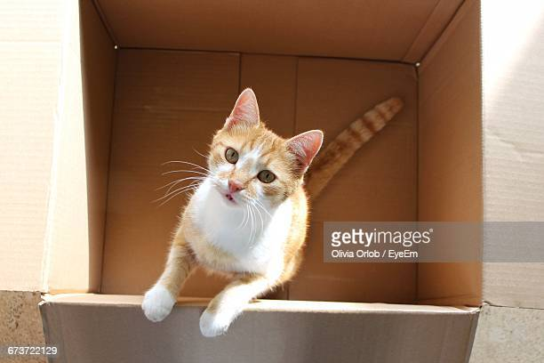 Directly Above Portrait Of Cat In Cardboard Box