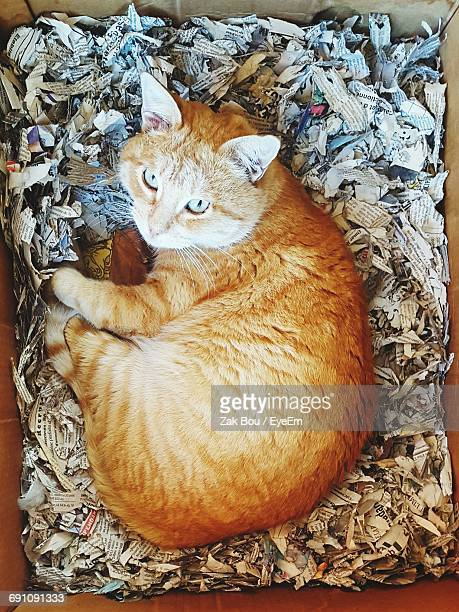 Directly Above Portrait Of Tabby Cat Relaxing In Box With Shredded Papers