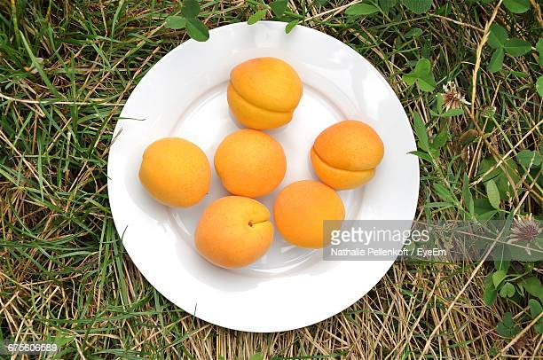 Directly Above Shot Of Apricots On Grassy Field