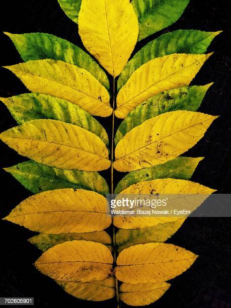 Directly Above Shot Of Autumn Leaves On Black Background