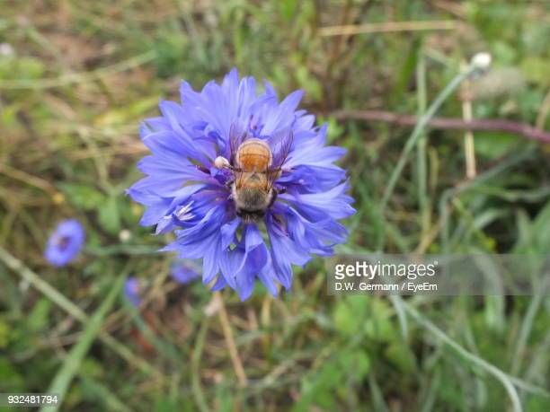 Directly Above Shot Of Bee Pollinating On Flower