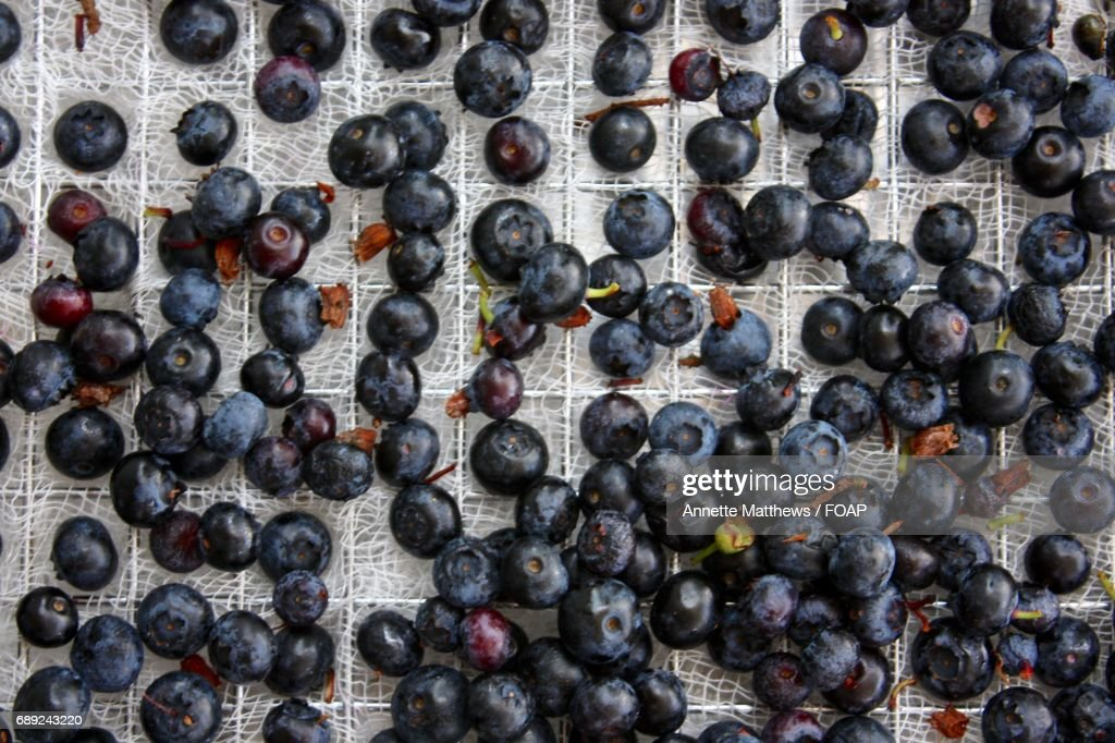 Directly above shot of blueberries : Stock Photo