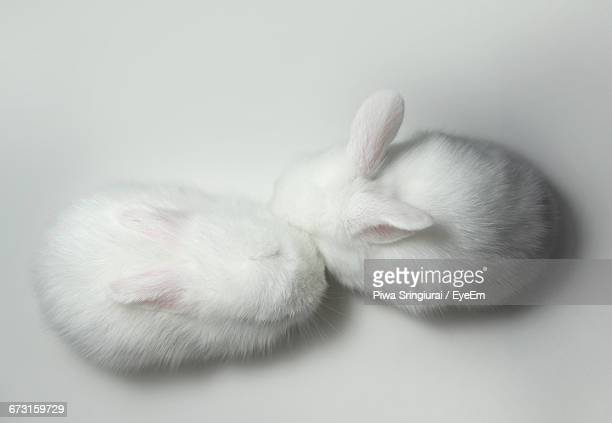 Directly Above Shot Of Bunnies Against White Background