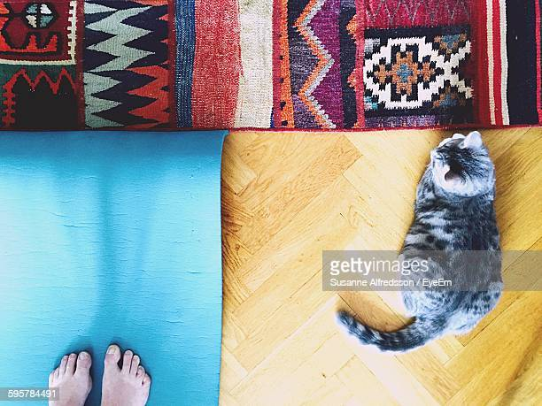 Directly Above Shot Of Cat And Person On Floor