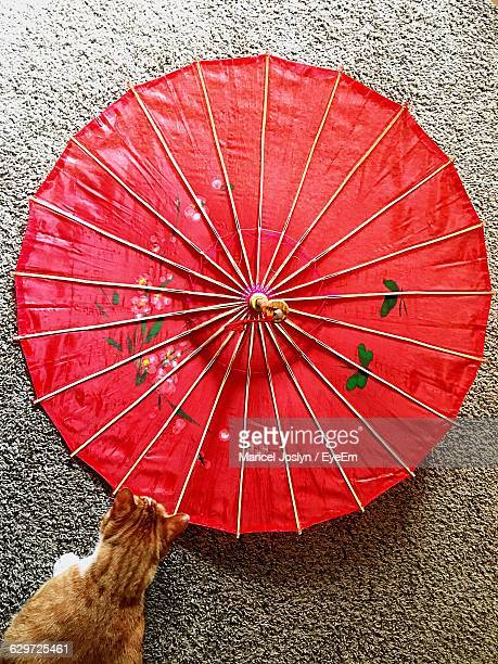 Directly Above Shot Of Cat By Red Paper Umbrella On Road