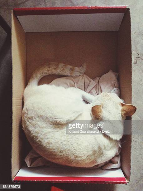 Directly Above Shot Of Cat Sleeping In Box