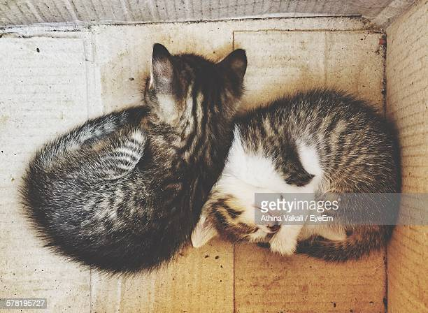 Directly Above Shot Of Cats Sleeping In Cardboard Box