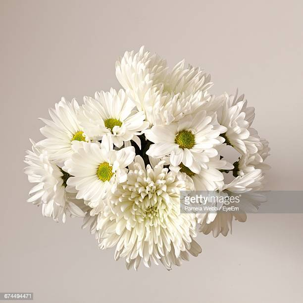 Directly Above Shot Of Chrysanthemum And Daisy Flowers Against White Background