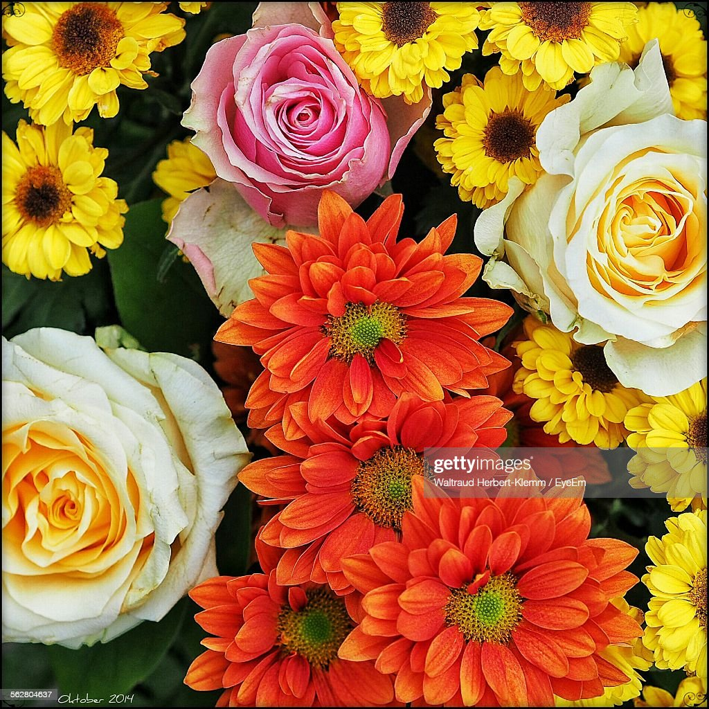 Directly Above Shot Of Colorful Flowers Stock Photo   Getty Images