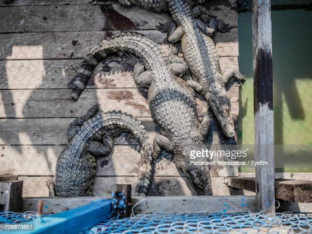 Directly Above Shot Of Crocodiles On Pier