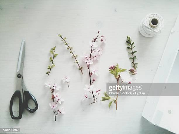 Directly Above Shot Of Cut Flower Plants With Scissors And Spool