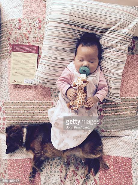 directly above shot of cute baby sleeping with dog on bed at home - vida de bebé fotografías e imágenes de stock