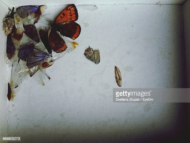 directly above shot of dead butterflies on floor - dead animal stock pictures, royalty-free photos & images