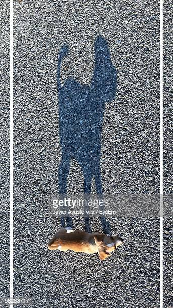 Directly Above Shot Of Dog And Its Shadow On Street