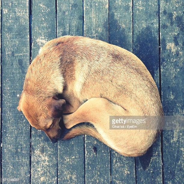 Directly Above Shot Of Dog Sleeping On Wooden Floor
