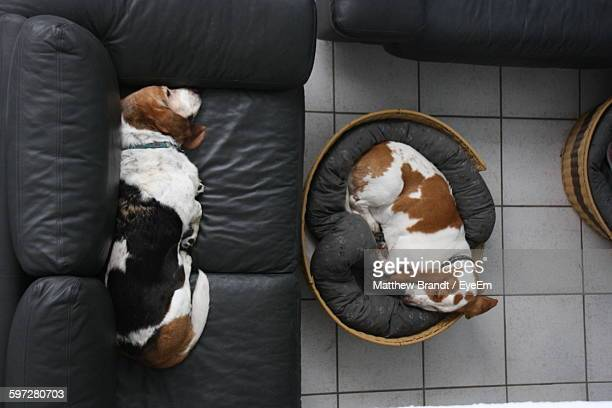 Directly Above Shot Of Dogs Sleeping At Home