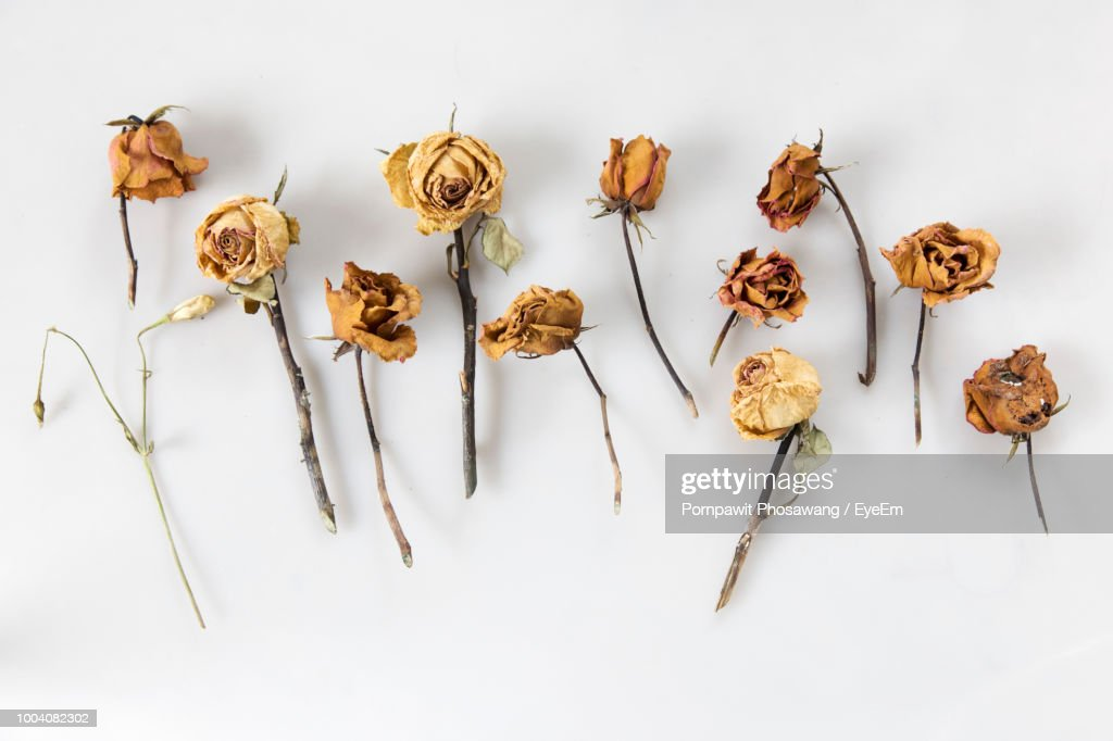 Directly Above Shot Of Dried Roses On White Background : Stock Photo