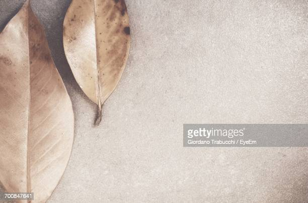 Directly Above Shot Of Dry Magnolia Leaves On Concrete Floor