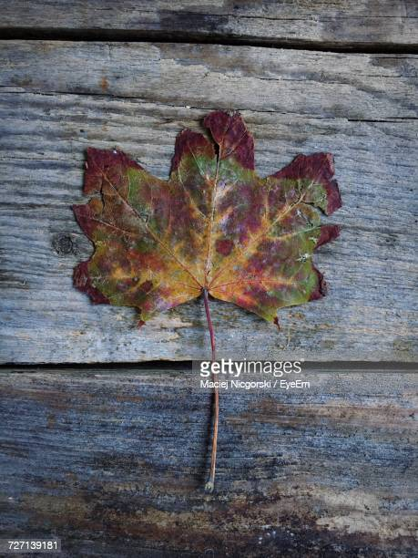 Directly Above Shot Of Dry Maple Leaf On Wooden Table