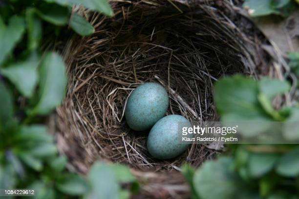 directly above shot of eggs in nest - birds nest stock photos and pictures