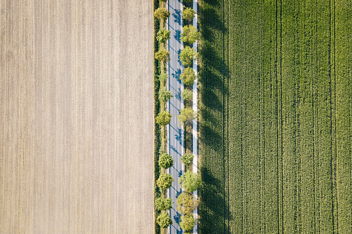 Directly Above Shot Of Farms - gettyimageskorea