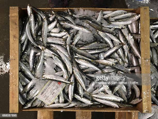 Directly Above Shot Of Fish In Crate With Ice For Sale At Market Stall