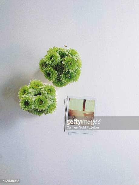 Directly above shot of flowers and photographs on table