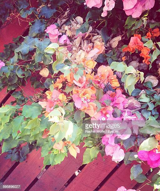directly above shot of flowers blooming in over wooden walkway - rachel wolfe stock pictures, royalty-free photos & images