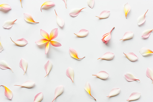 Directly Above Shot Of Frangipanis Over White Background - gettyimageskorea