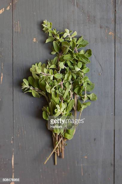 Directly above shot of fresh oregano on table
